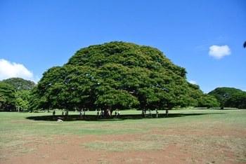 この木.JPG