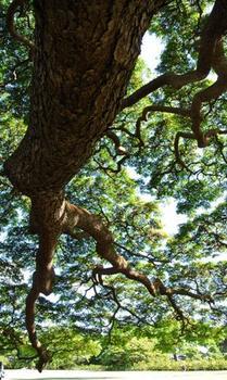 木(内側なの).JPG