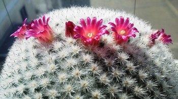 saboten_flower2.jpg